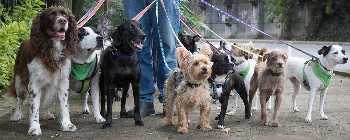 Hunde-Ratgeber von Stallbedarf24