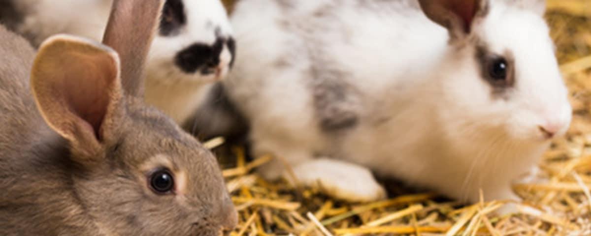 Kaninchen-Ratgeber von Stallbedarf24