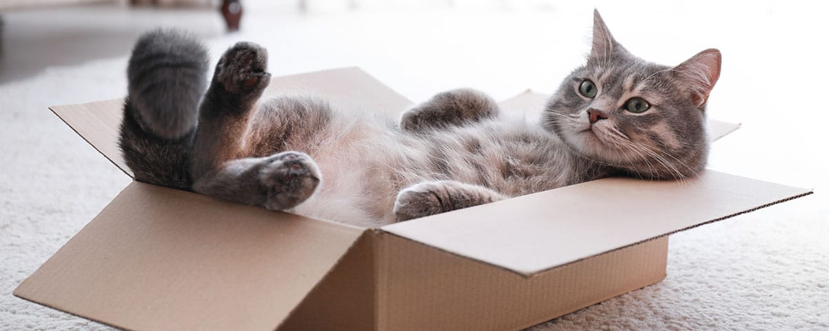 Katzen-Ratgeber von Stallbedarf24