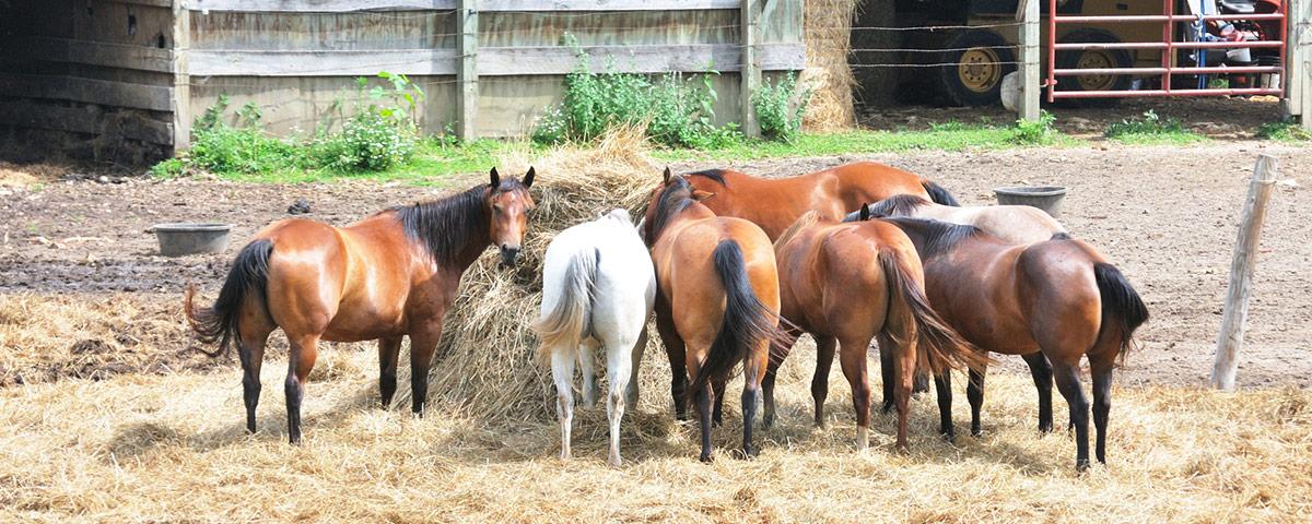 Pferde-Ratgeber von Stallbedarf24