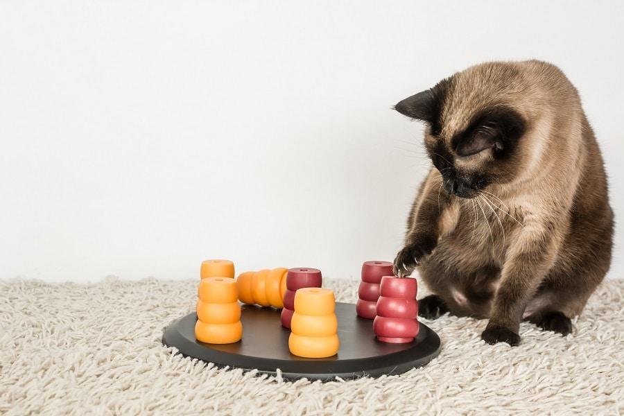 Katze spielt mit einem Intelligenzspielzeug auf dem Teppich