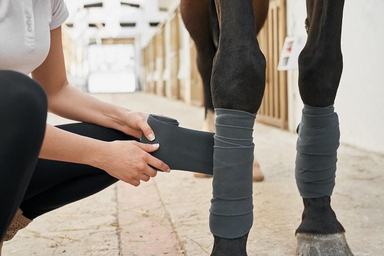 Pferd im Stall wird bandagiert