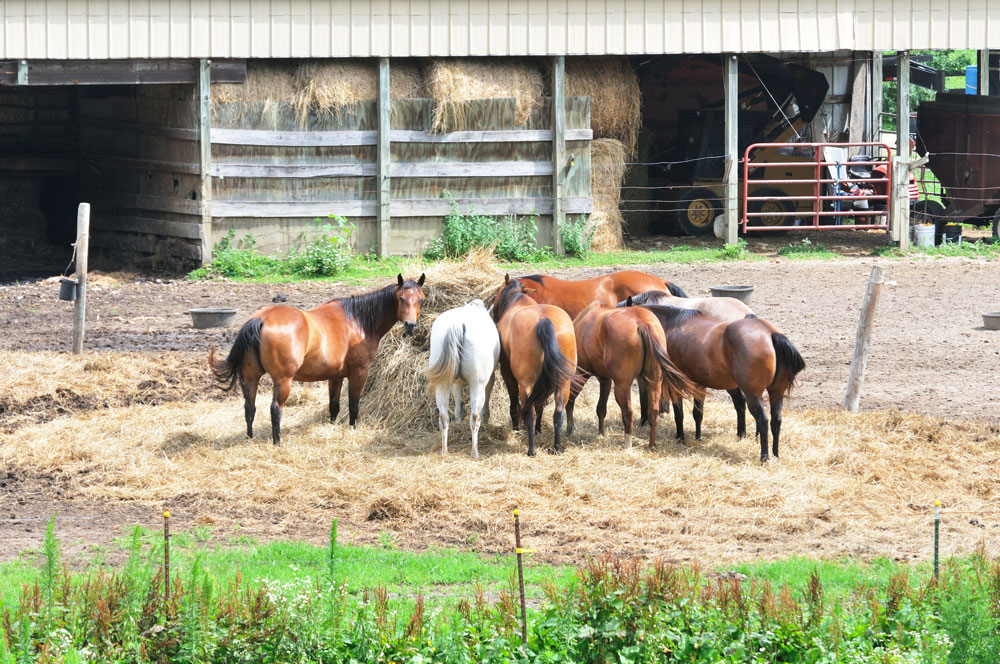 Pferde vor Ihrem Pferdestall