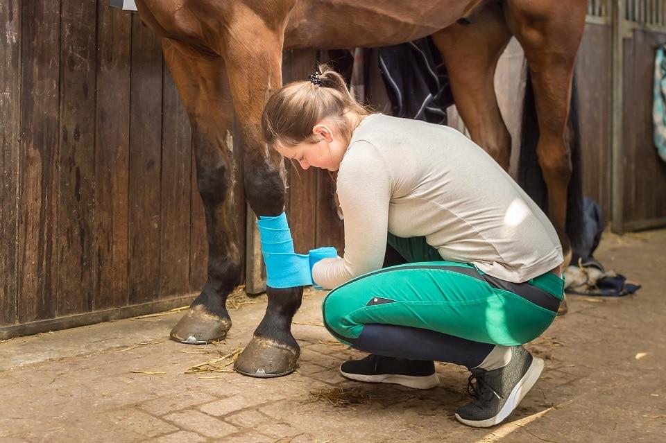 Junge Frau bandagiert ihr Pferd vor dem Reiten