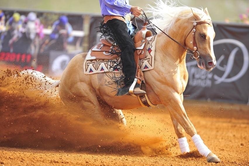 Westernreiter der mit seinem Pferd scharf bremst