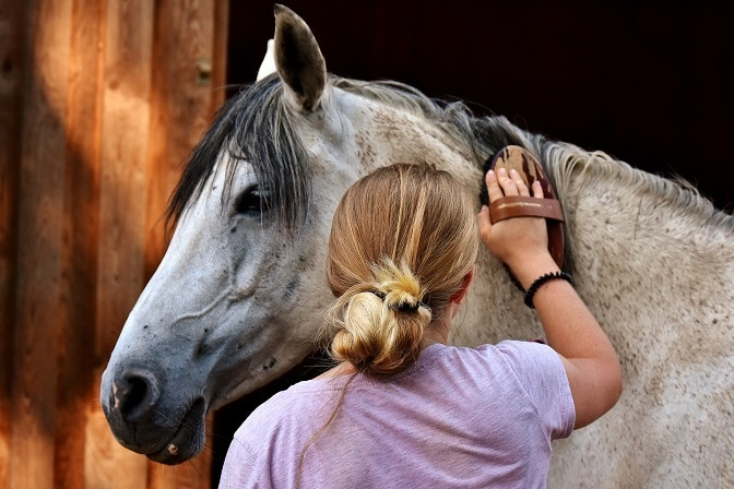 Fellpflege beim Pferd