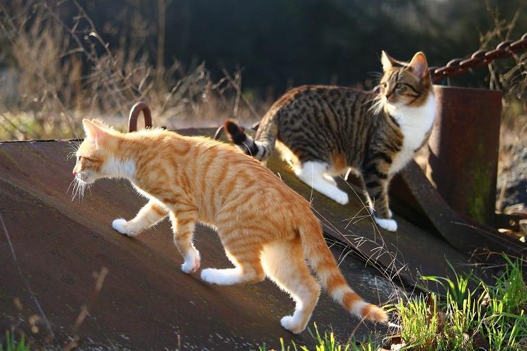Zwei Katzen unterschiedlicher Rassen