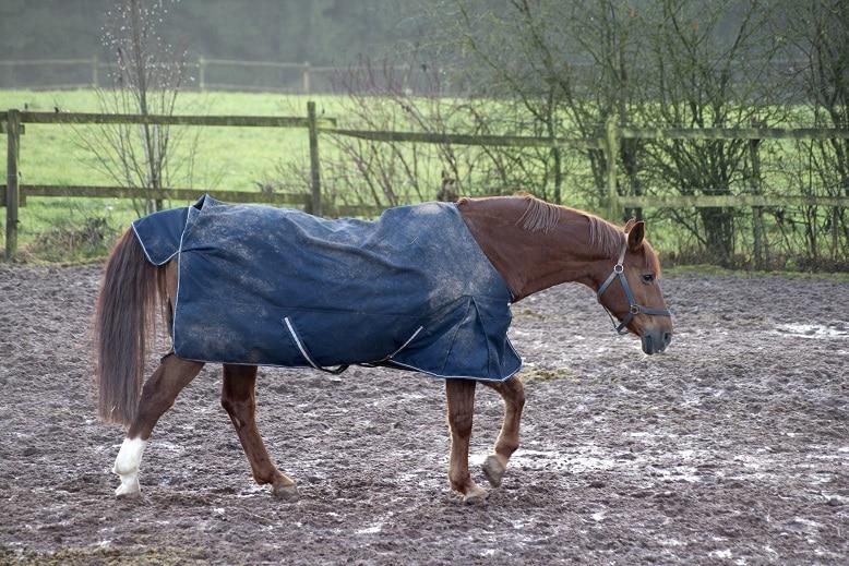 Pferd steht auf feuchtem Untergrund - Strahlfäule oft die Folge