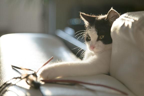 Katze spielt mit einer Spielzeugmaus