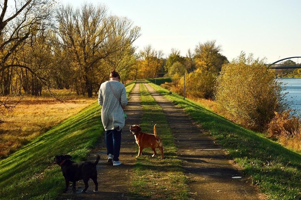 Frau geht mit zwei Hunden Gassi