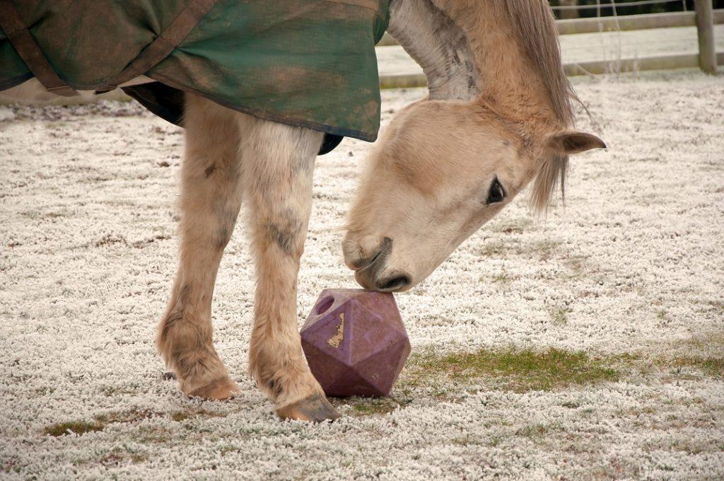 Pferd spielt mit einem Futterball