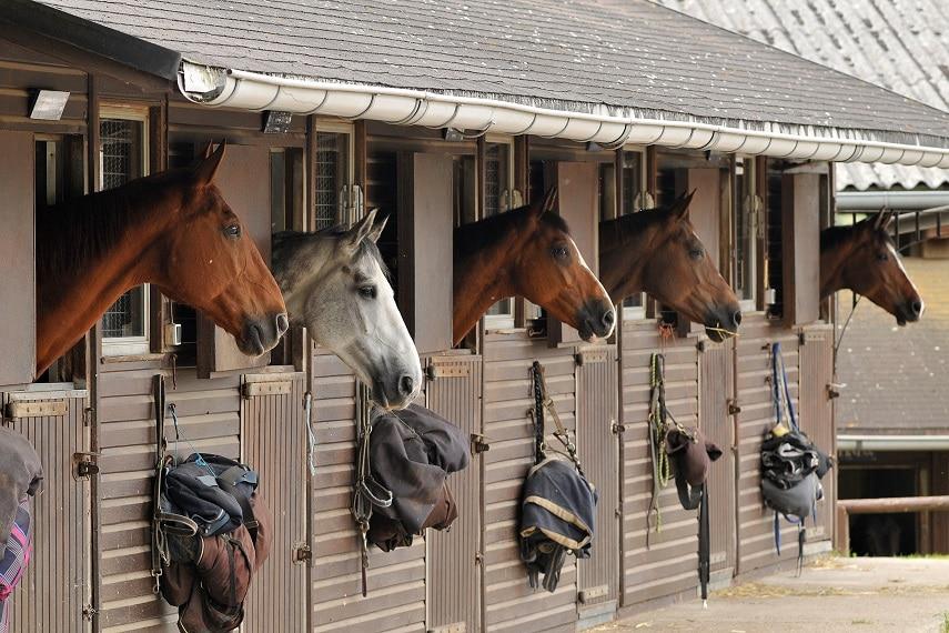 Einzelhaltung und Gruppenhaltung bei Pferden